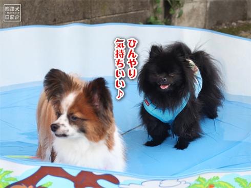 20130725_犬プール1