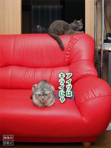 20130725_猫たち3