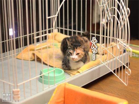 20130725_猫たち1