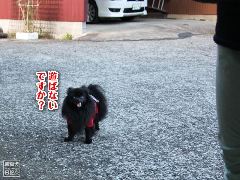20130823_お隣さん4