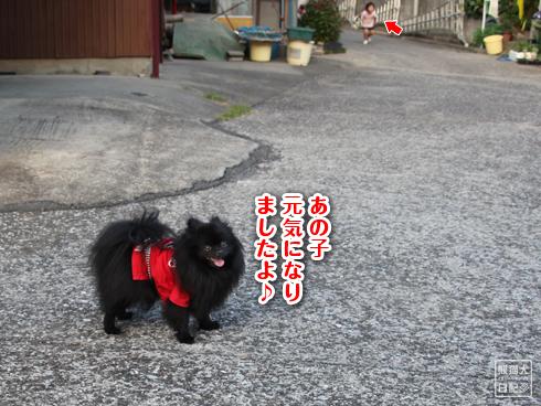 20130823_お隣さん8