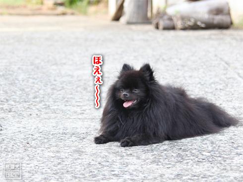 20130831_こぼれ写真1