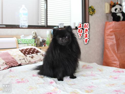 20130930_真熊3