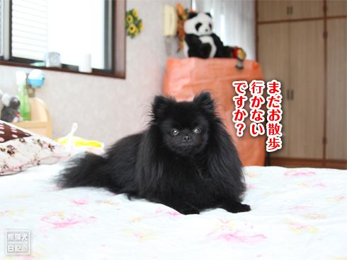 20130930_真熊2