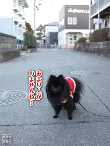 20140103_見知らぬ猫10