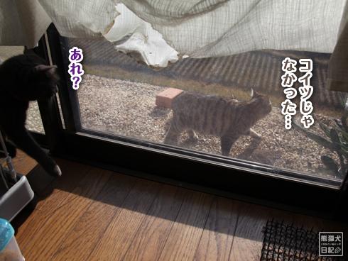 20140103_見知らぬ猫8