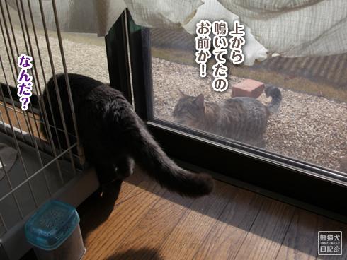 20140103_見知らぬ猫7