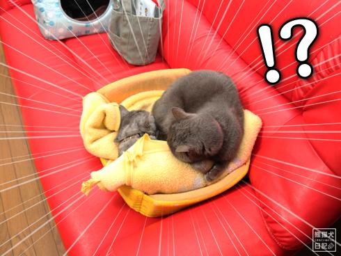 20140113_眠り猫たち2