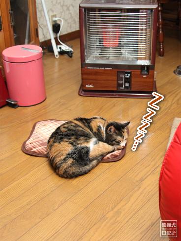 20140113_眠り猫たち6