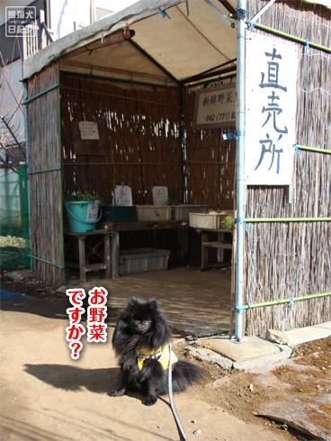 20140123_真熊散歩4