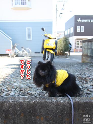 20140123_真熊散歩2