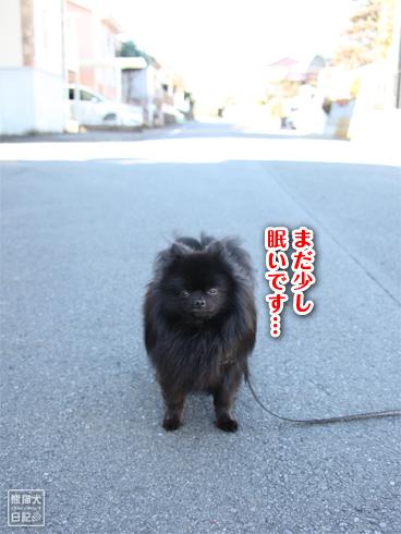 20140123_真熊散歩1