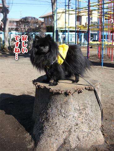 20140123_真熊散歩8