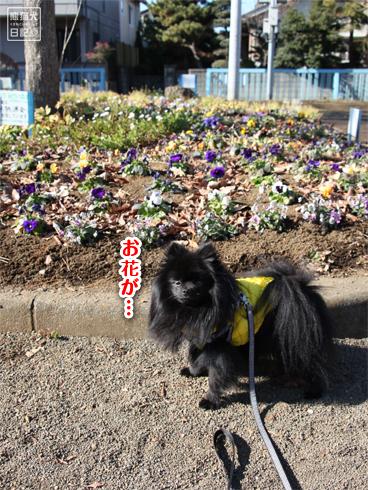 20140123_真熊散歩6