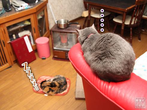 20140124_猫たち4