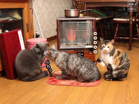 20140124_猫たち3