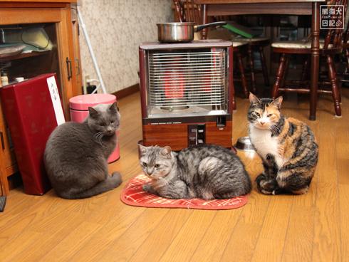 20140124_猫たち1