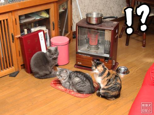 20140124_猫たち2