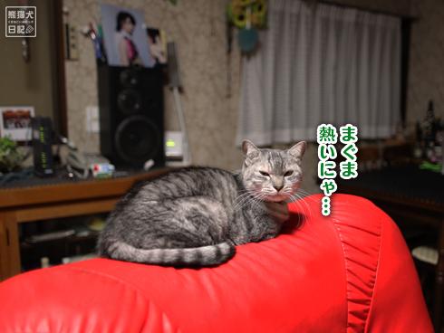 20140124_猫たち7