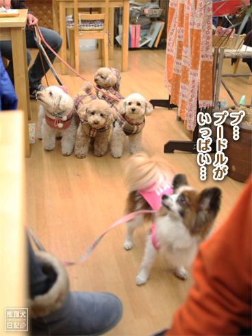 20140129_カフェ真熊6