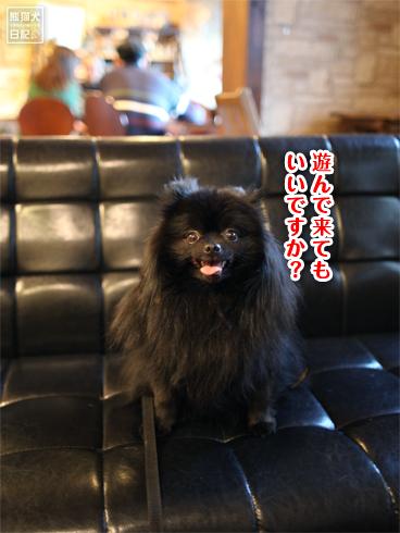 20140131_ドッグカフェ3