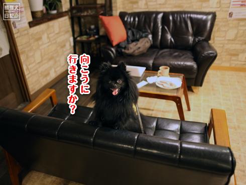 20140131_ドッグカフェ1
