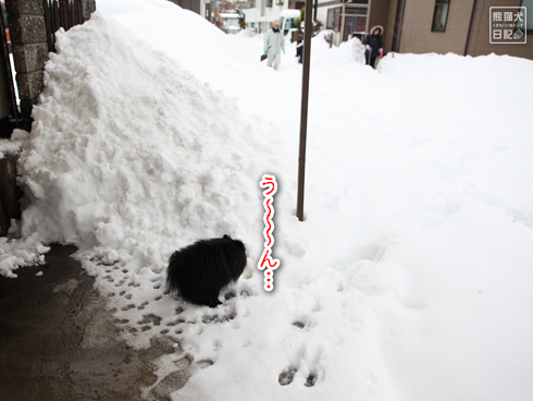 20140216_大雪被害4
