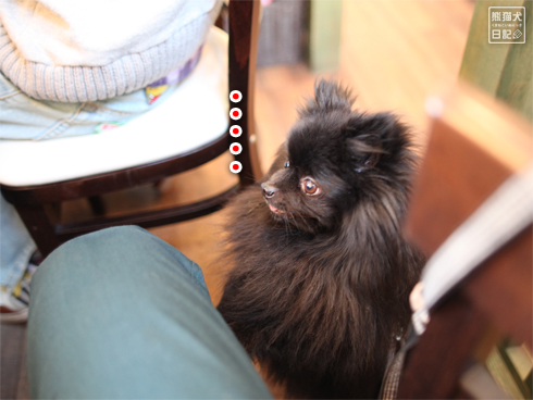 20140502_ドッグカフェと大型犬5