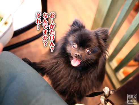 20140502_ドッグカフェと大型犬4