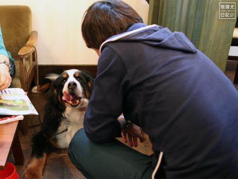 20140502_ドッグカフェと大型犬1