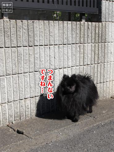 20140512_アンニュイ真熊4