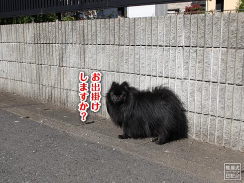 20140512_アンニュイ真熊2