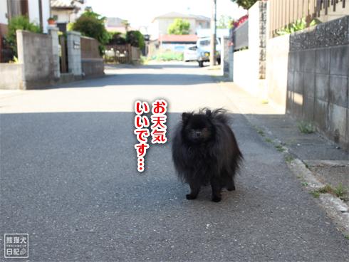 20140512_アンニュイ真熊1