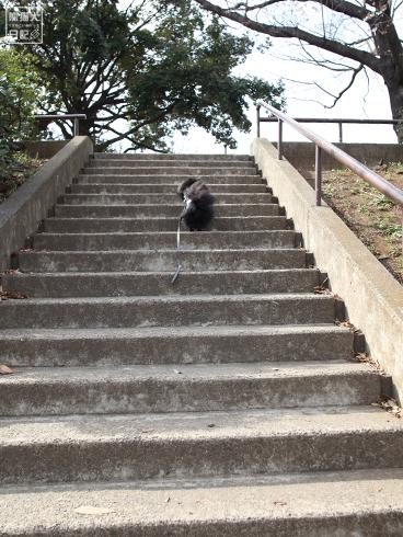 20140514_階段