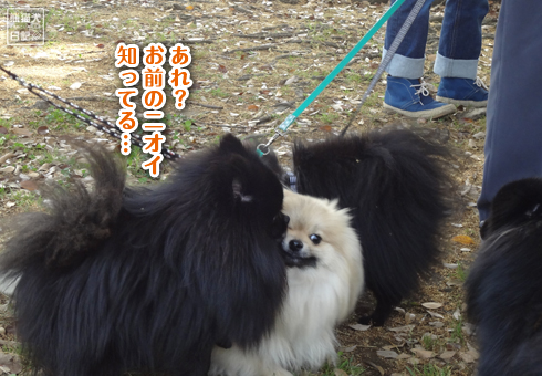 20140522_真熊一族4