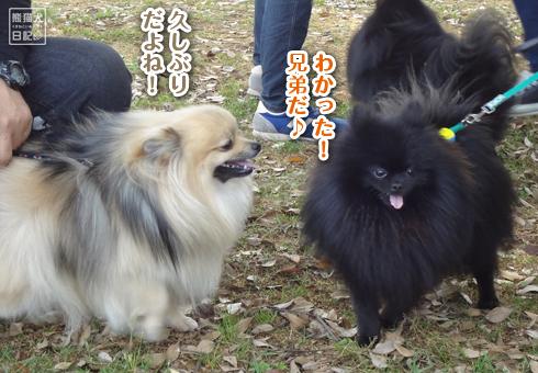 20140522_真熊一族6