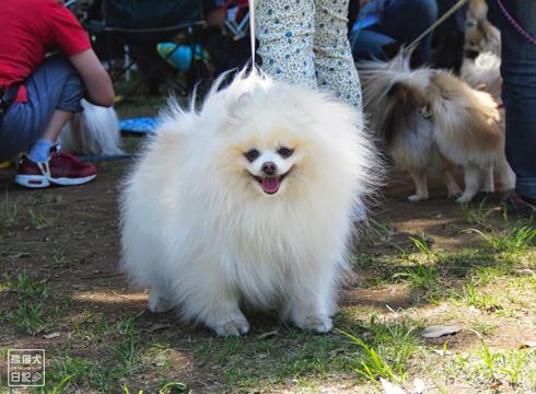 20140525_参加犬たち4