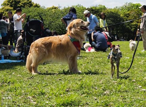20140525_参加犬たち6