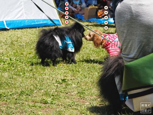 20140525_犬コミュニケーション5