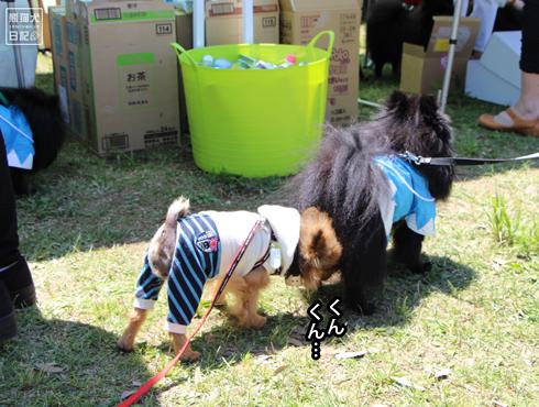 20140525_犬コミュニケーション4