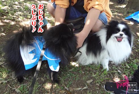 20140525_犬コミュニケーション3