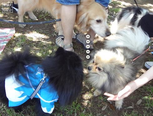 20140525_犬コミュニケーション2