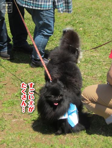 20140525_犬コミュニケーション1