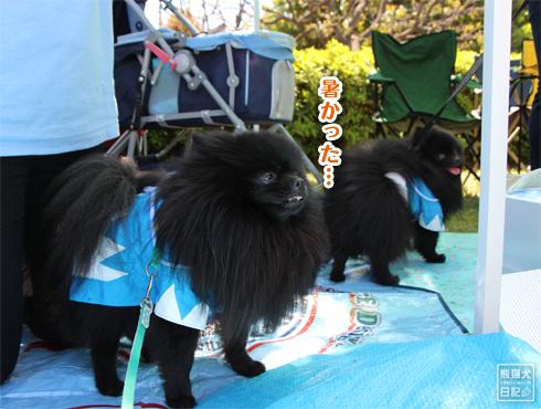 20140525_犬コミュニケーション9