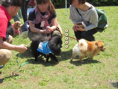 20140525_犬コミュニケーション8