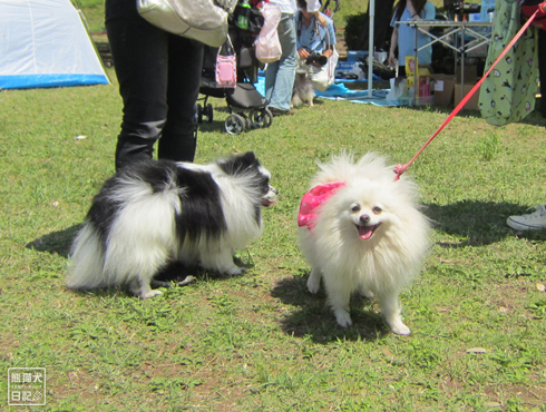 20140530_参加犬たち6