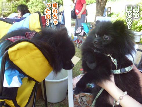 20140531_志熊ノックアウト10