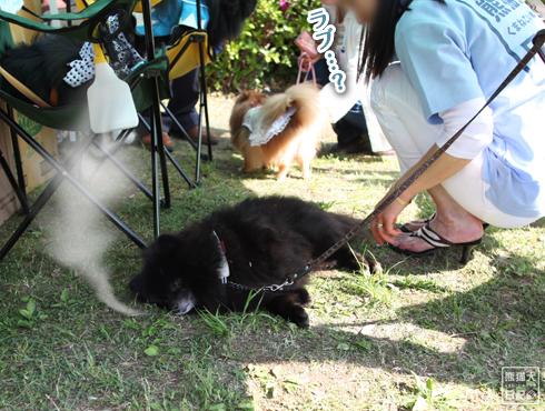 20140605_黒サモエド10
