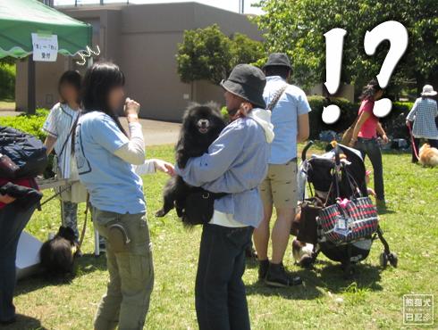 20140605_黒サモエド7