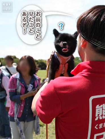 20140609_見たことある犬2
